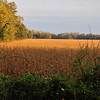 Starting- A soybean field next to Meeman-Shelby Forest State Park, TN
