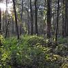 25 steps- Entering the bottom-land forest