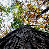 25 more steps - a squirrel-eye view of fall