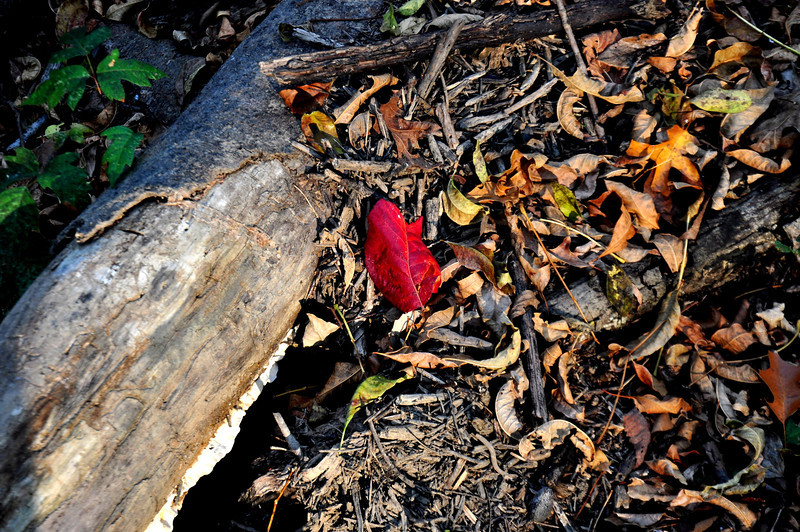 25 more steps- a splash of red