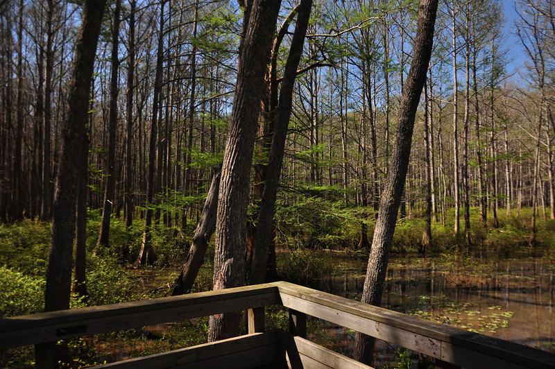 Wolf River swamp ( West )
