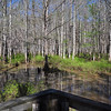Wolf River swamp ( north)