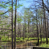 Wolf River swamp, east