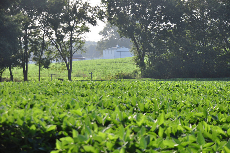 Farm near Trenton, TN
