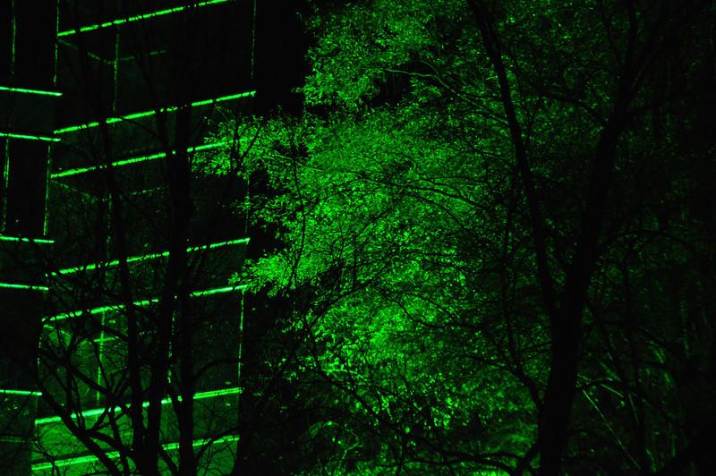 tree iluminated by green light, Atlanta