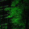 tree iluminated by green light, Atlanta