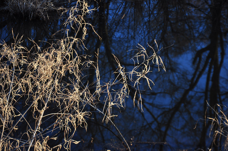 Winter grass contrasts with dark water