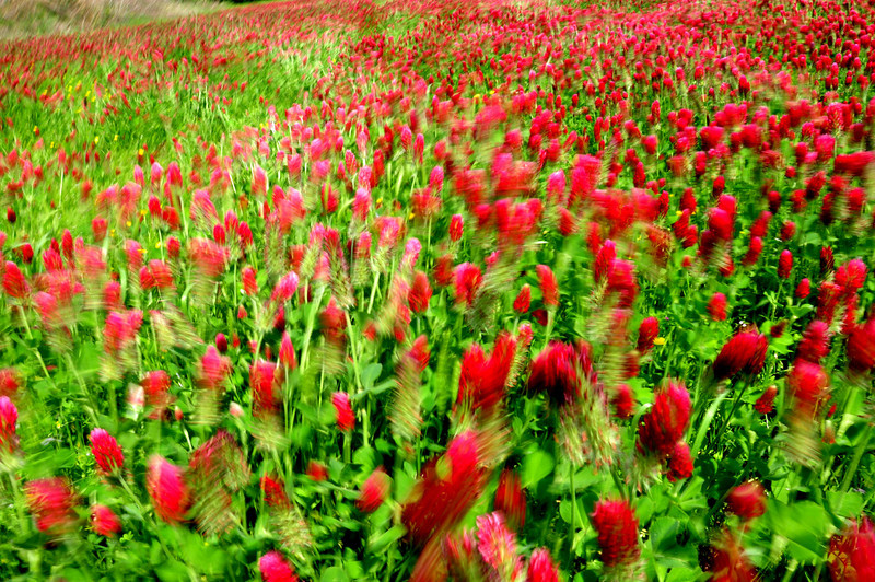Breeze and a field of red here at Appling and Dexter, Memphis, TN