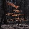 trees frame the dogwood