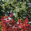 Birmingham Botanical Gardens.