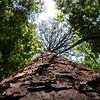 Squirrel - eye view of a Southern slash pine