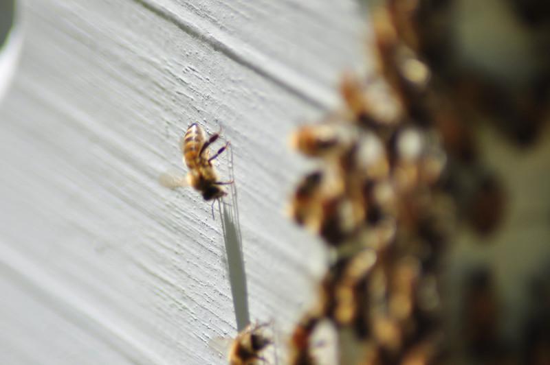 Bee hive. Birmingham