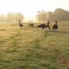Audobon Park August 2008