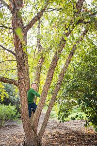 big tree (1 of 1)