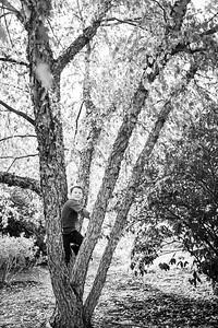 big tree (1 of 1)-2