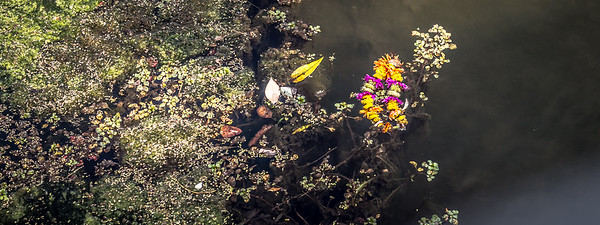 flower crown in water (1 of 1)