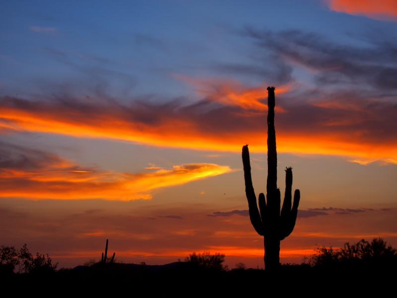Arizona saguaro sky