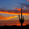 Arizona saguaro sky