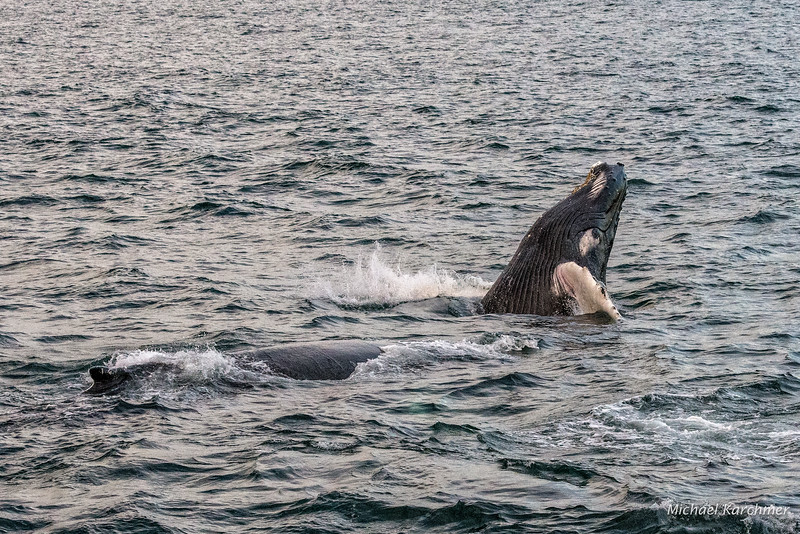 MKarchmer Whale Watch-5