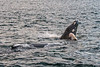 MKarchmer Whale Watch-5