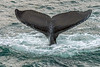 MKarchmer Whale Watch-3