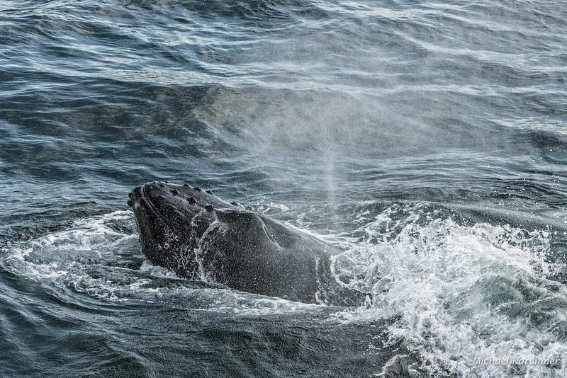 MKarchmer Whale Watch-4