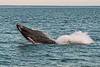 MKarchmer Whale Watch-6