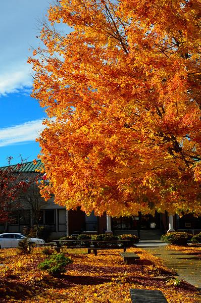 Sunset and Fall Foliage Nov 12 2013