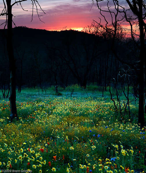 Sunset and Wildflowers<br /> <br /> Mariposa, CA<br /> 13 May 2009