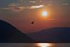 Bird of Peace 1