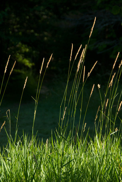 Just some tall grass at our camp site, but I thought it was pretty.