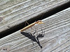 Mantis with Shadow