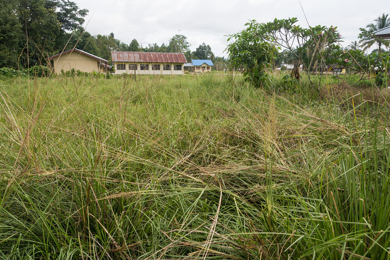 YMP3 Vetiver Grass nursery in the Meyah language area near Manokwari, West Papua, Indonesia, November 2015. [Papua Manokwari 2015-11 183 Indonesia]