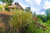 Vetiver Grass planted for erosion control as part of the Dumagat Ecotourism Project in General Nakar, Luzon, Philippines, October 2016. [Dumagat 2016-10 052 Luzon-Philippines]