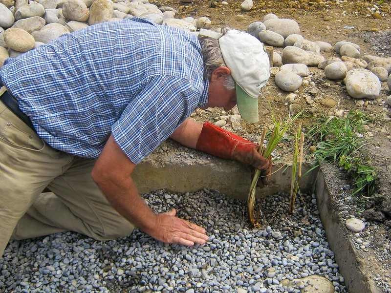 David demonstrating correct planting of Vetiver Grass slips at a training session. We constructed a Horizontal Sub-Surface Flow Constructed Wetland for wastewater treatment, at the Catholic aviation program in Wamena, Papua, May 2013.[Papua Wamena 2013-05 095 Roberts]