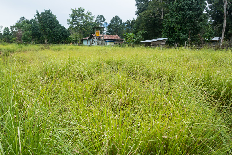 YMP3 Vetiver Grass nursery in the Meyah language area near Manokwari, West Papua, Indonesia, November 2015. [Papua Manokwari 2015-11 130 Indonesia]