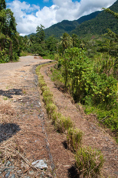 Freshly trimmed and weeded Vetiver hedge planted along gabions at an erosion control project at HIS, Sentani, Papua, December 2012. [Papua Sentani 2012-12 044 Indonesia]