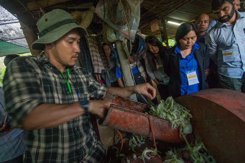 Sombat of Chiang Mai demonstrates a method of grinding banana stems to participants of a LEAD Asia field trip, November 2014. The pulp is then fermented to increase protein content and then fed to pigs.