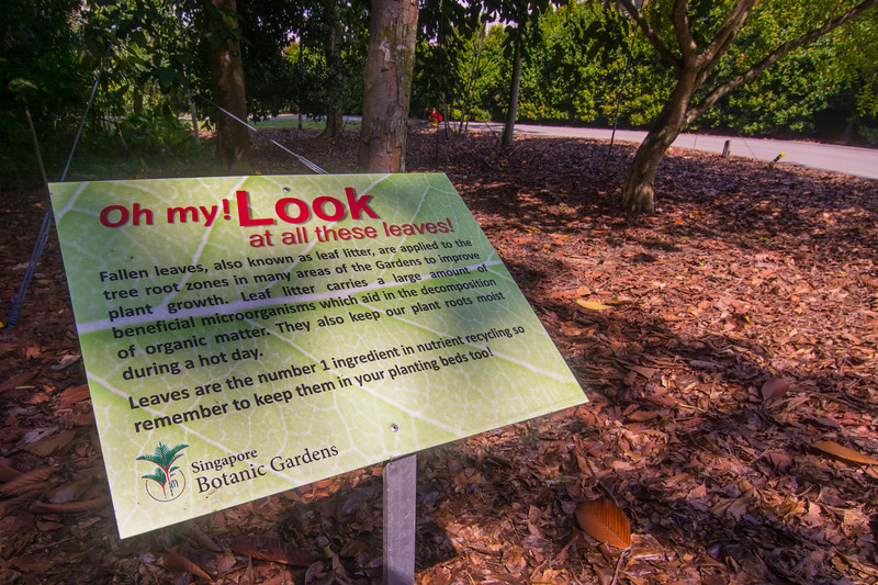A new look for the Singapore Botanic Gardens, one that utilizes leaf litter and recognizes its value and important part in ecological systems. November 2014. [Singapore Botanic Gardens 2014-11 010 Singapore]