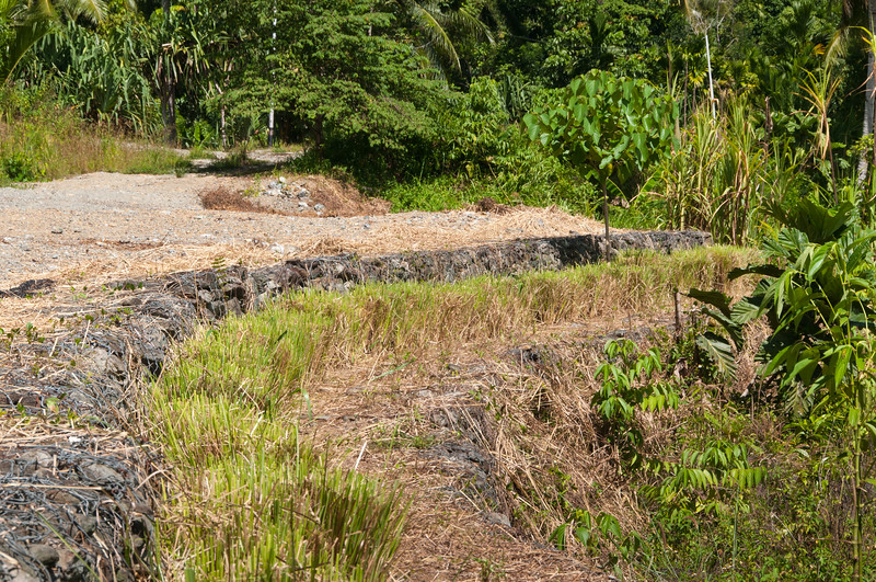 Freshly trimmed and weeded Vetiver hedge planted along gabions at an erosion control project at HIS, Sentani, Papua, December 2012. [Papua Sentani 2012-12 053 Indonesia]