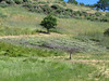 Barney and Bill whacked weeds on this hillside above the fire road.