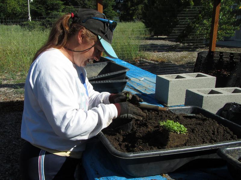 Hollie separates seedlings.