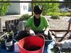 Sonia preps soil for potting.