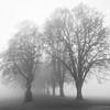Trær i tåke / Trees in fog<br /> Klokkarstua, Asker 8.11.2020<br /> Canon 5D Mark IV + EF17-40mm f/4L USM @ 25 mm