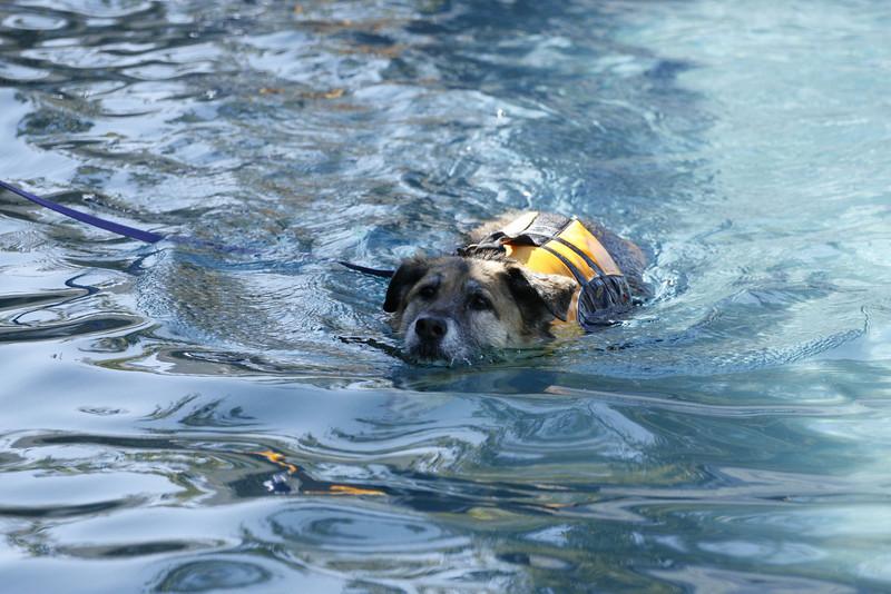 Swimmer55