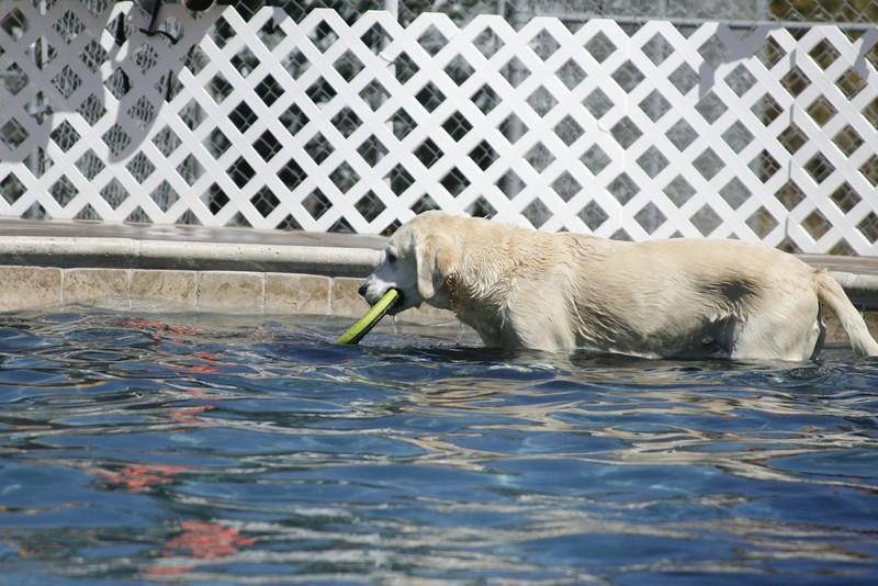 Swimmer32