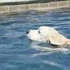 Swimmer36