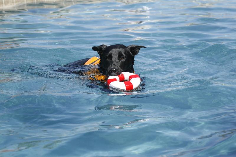 Swimmer27