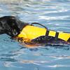 Swimmer25