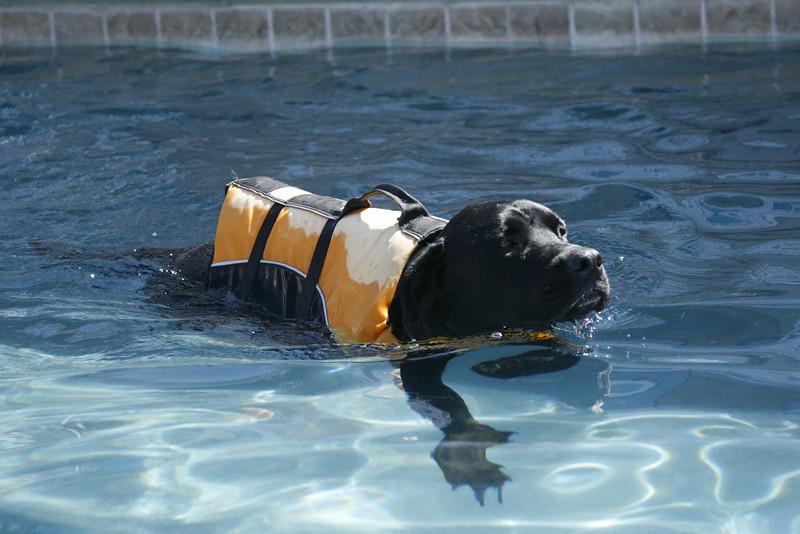 Swimmer18